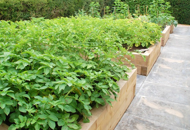 Landscape Design Tips for Gardening