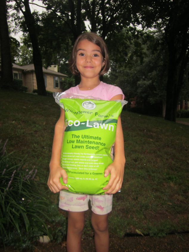 Low Maintenance Grass Seed