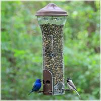 attracting birds for birdwatching