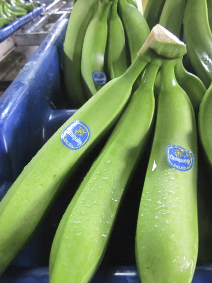 Chiquita bananas / Family Focus Blog