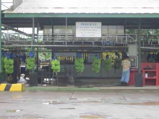 Empresa de Servicios- banana packaging plant / Family Focus Blog