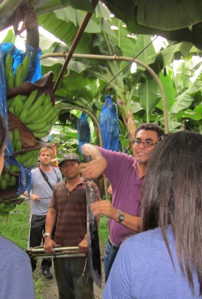 banana machete safety / Family Focus Blog