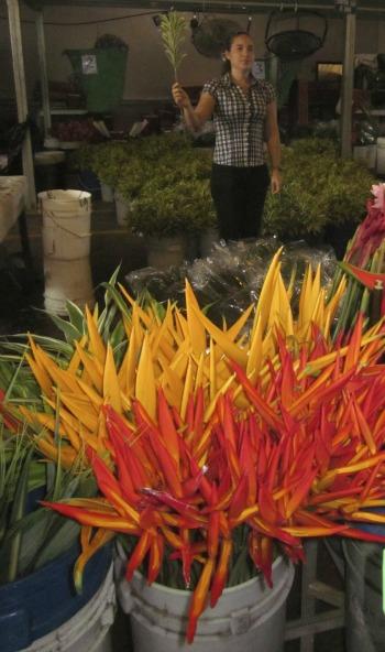 bird of paradise flowers / Family Focus Blog