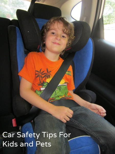 car safety tips for kids and pets / Family Focus Blog