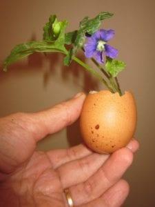 eggshell nursery instructions / Family Focus Blog