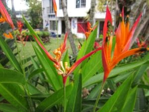 benefits of planting flowers- birds of paradise / Family Focus Blog