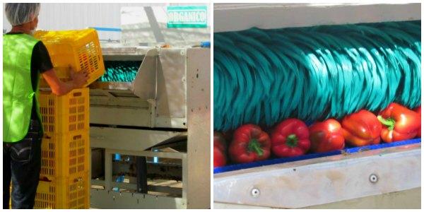Organic Fair Trade Pepper Washer / Family Focus Blog