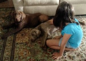 tips for introducing toddlers to dogs
