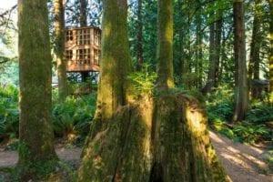 world renowed treehouse exterior- 2 stories