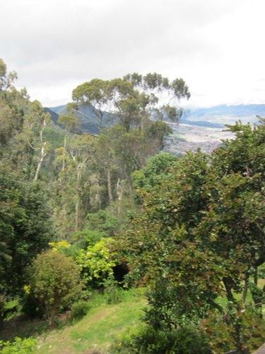 Colombian vegetation
