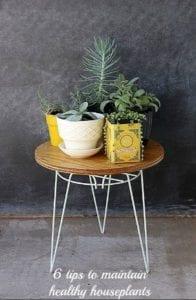 tips to maintain helathy houseplants
