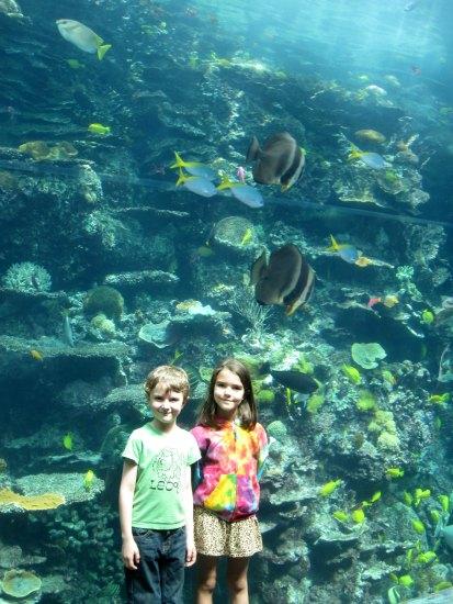 Tropical Diver at the Georgia Aquarium