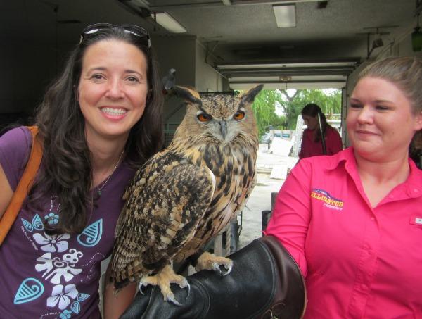 Eurasian Owl Myrtle Beach