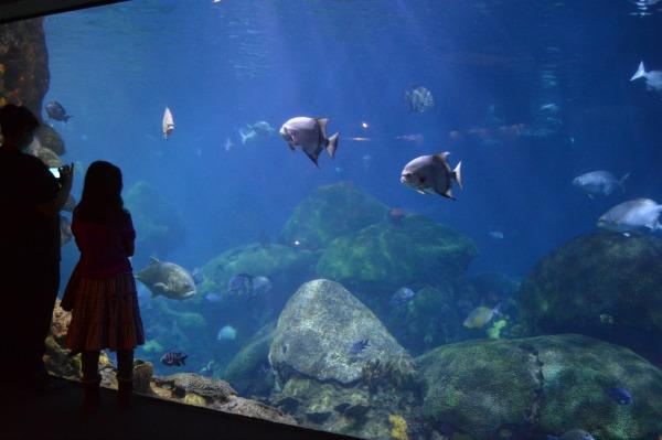 Aquarium Chattanooga