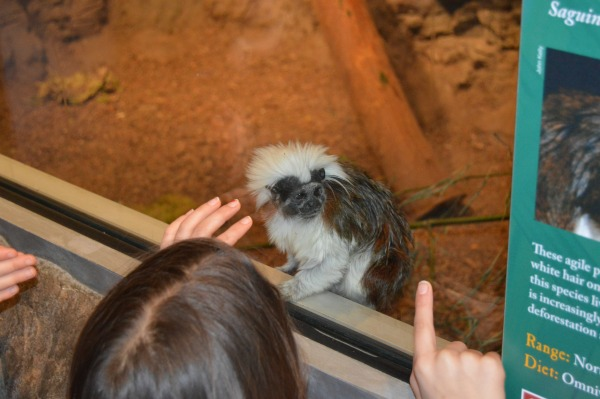 Zoo Chattanooga, TN
