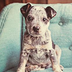 pet damage and furniture repairs