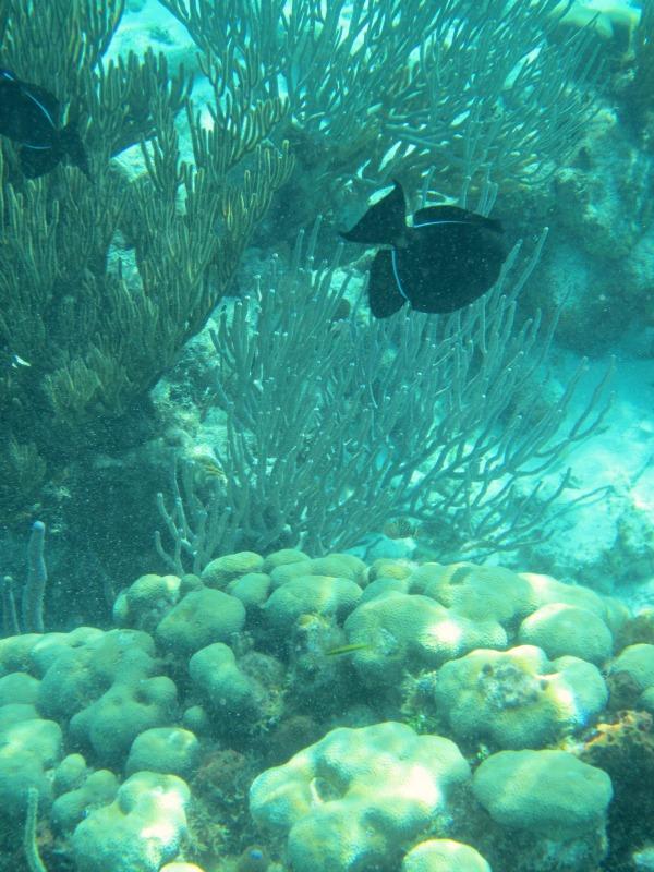 snorkeling grand caymans