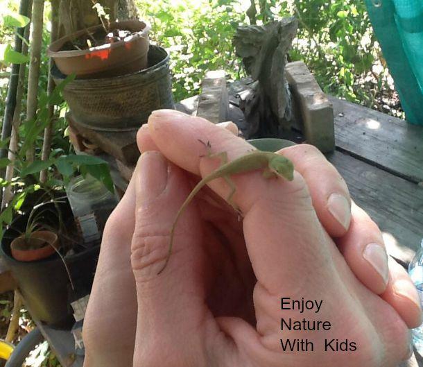 nature games catch a lizard