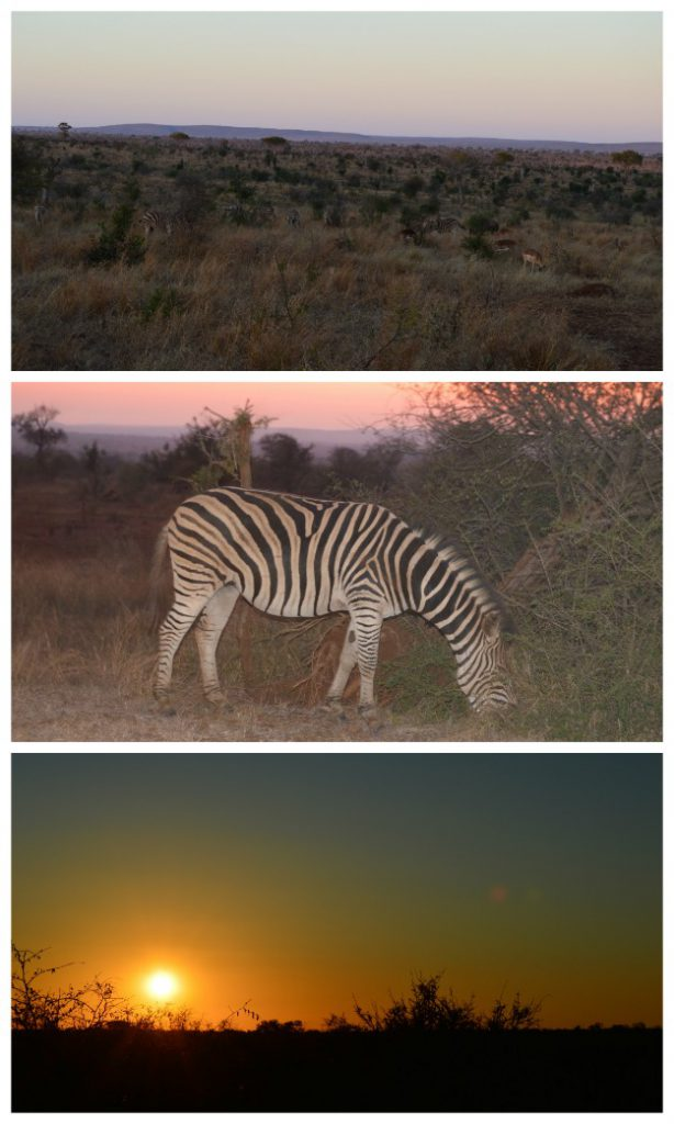 Evening Kruger Park Safari