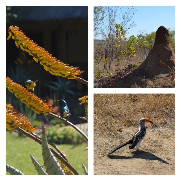 Kruger Park Collage