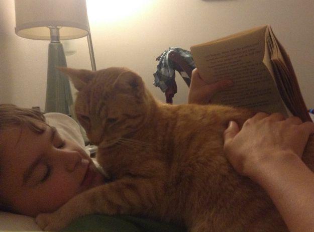 cat book break