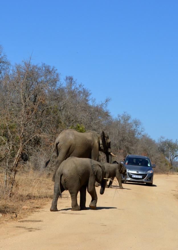 elephants car