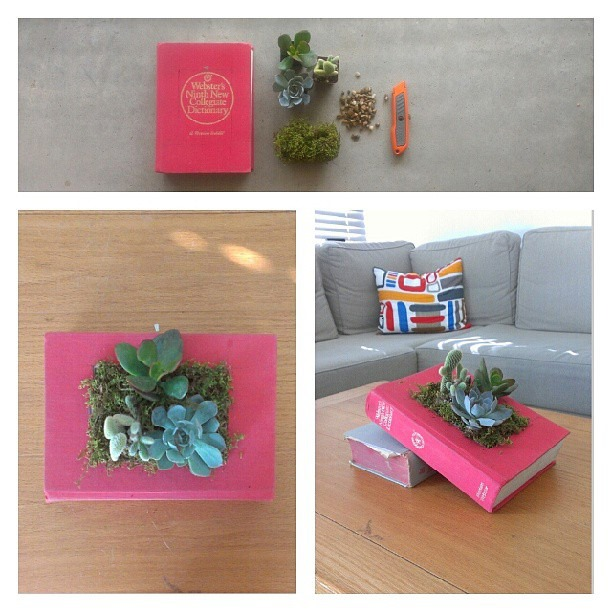diy succulent book planter