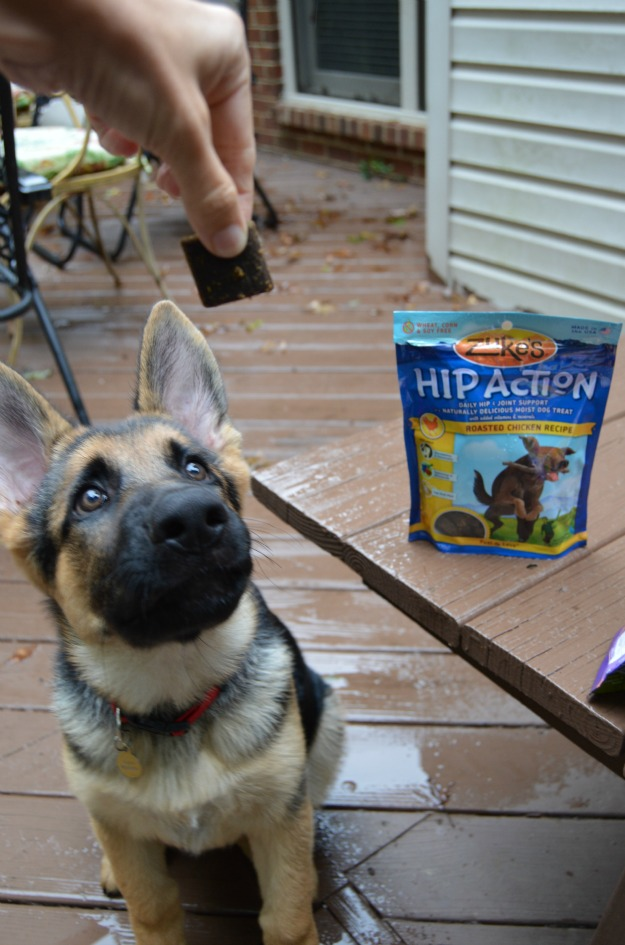 Joint Support For Dogs Hip Action