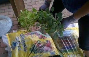 gather window gardening supplies