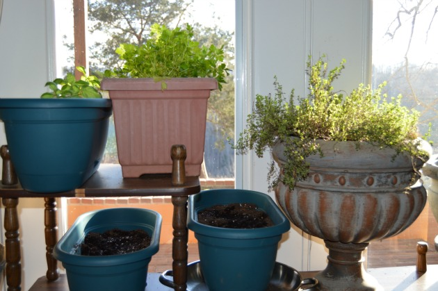 herb window garden