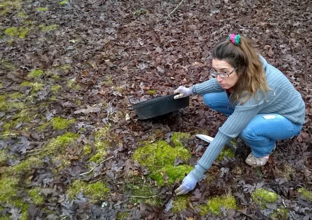 make moss garden