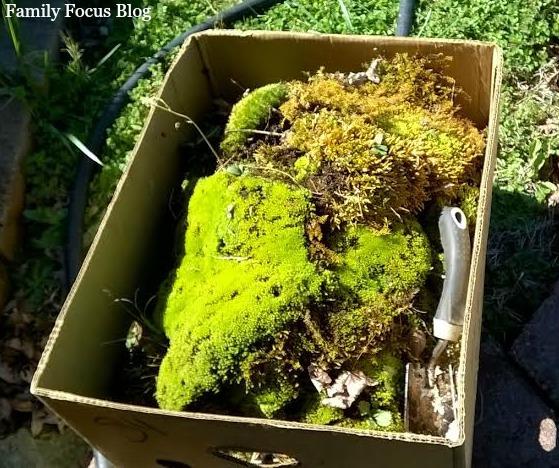 Box of Moss