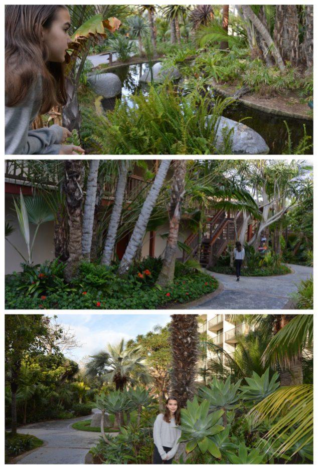 Catamaran Resort Jungle Grounds