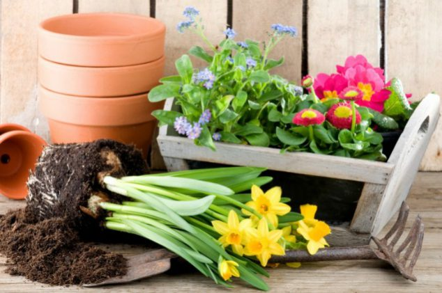 Mid-Winter Care For Your Garden