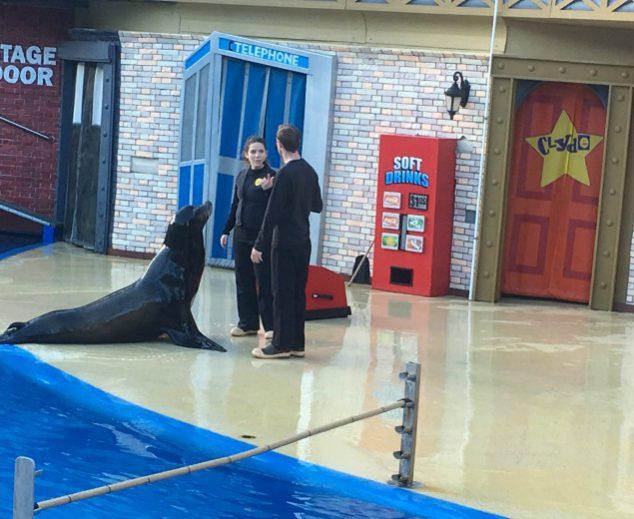 sea lions live show