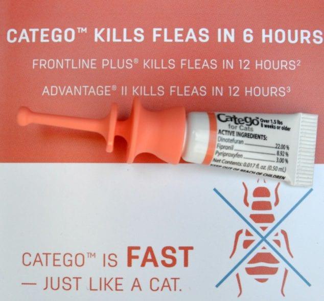 kill fleas fast