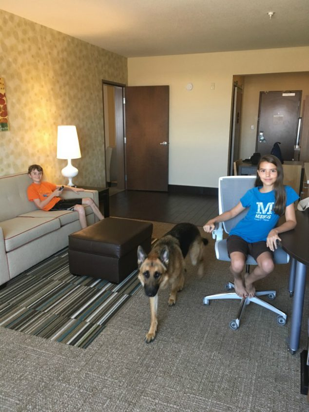 pet friendly hotel albuquerque nm