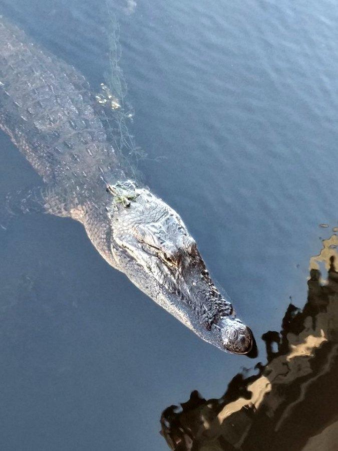 Brazos Bend State Park Wildlife Photography