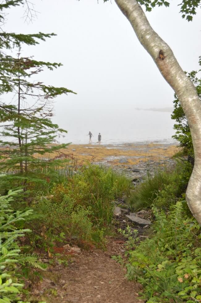 Maine Oceanside With Mist