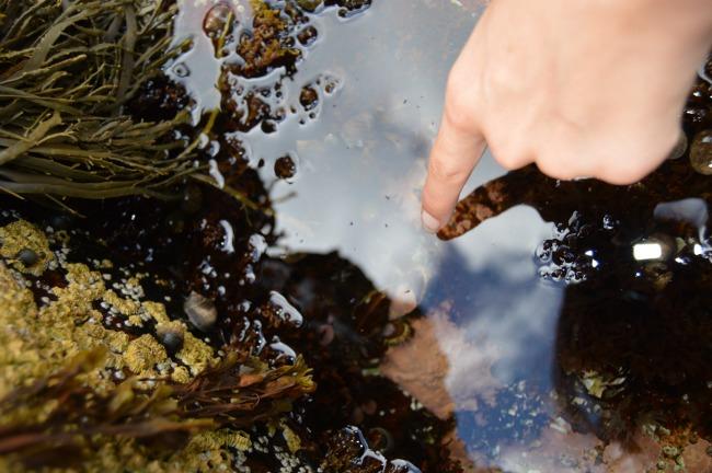 Tidal Pools Acadia