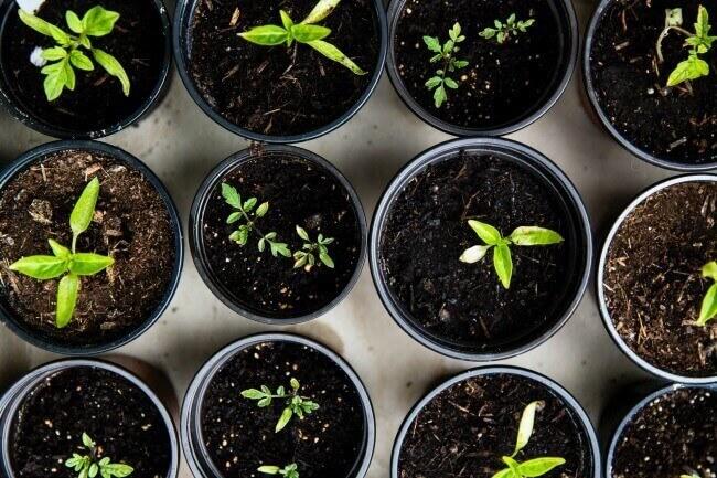 vegetable garden hacks
