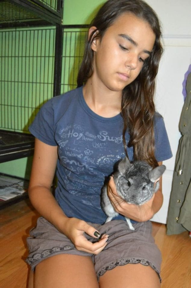 chinchillas as pets