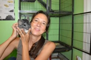 pet chinchilla