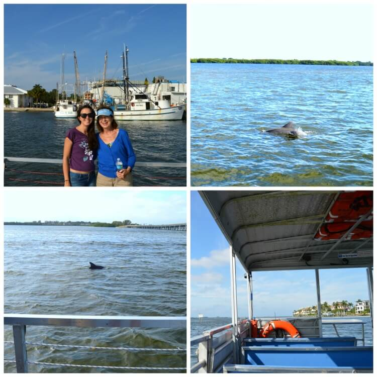 AMI dolphin tour
