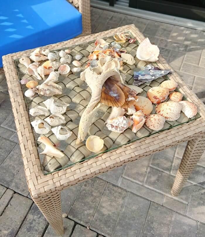 anna maria island shells