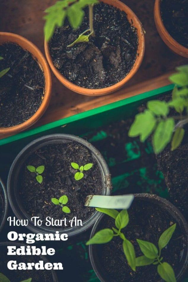 start edible garden