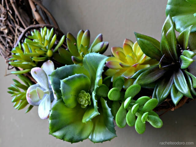 succulent wreath craft