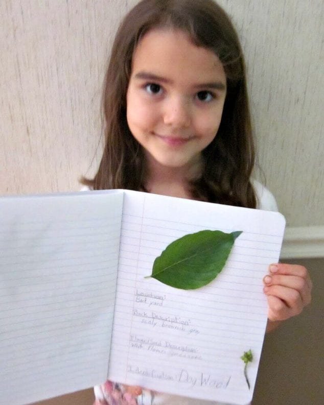 tree identification activities for kids