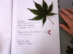 make tree identification book