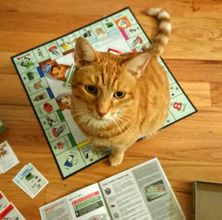 monopoly cats